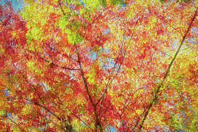 Splash Of Autumn Art Print by Lisa Bell