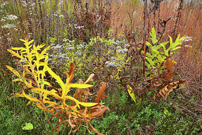 Photograph - Splash Of Color In Marengo Ridge Prairie by Ray Mathis