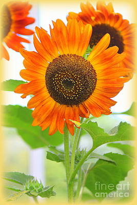 Photograph - Vibrant Orange Sunflowers by Dora Sofia Caputo Photographic Design and Fine Art