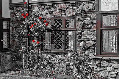 Photograph - Splashes Of Red by Elaine Teague