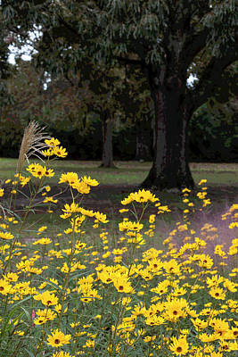 Photograph - Splashes Of Yellow by Suzanne Gaff