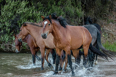 Photograph - Splashin by Teresa Wilson