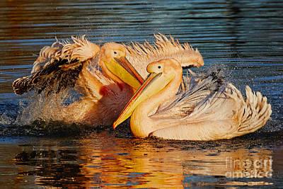 Photograph - Splashing Fun For Two by Nick Biemans