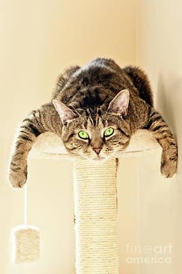 Photograph - Splat Cat by Terri Waters