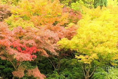 Photograph - Splendid Autumn by Frank Townsley