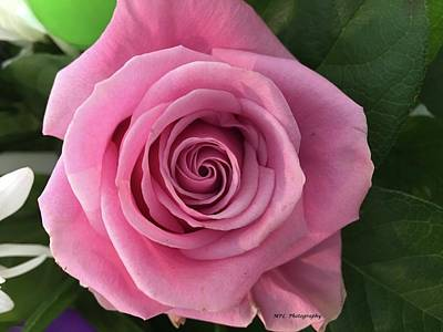 Photograph - Splendid Rose by Marian Palucci-Lonzetta
