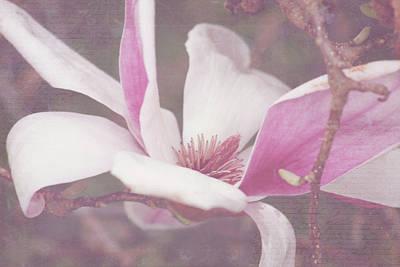 Art Print featuring the photograph Splendid Tulip Tree  by Toni Hopper