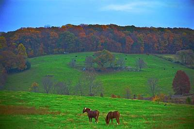 Photograph - Splendor In The Grass by Tracy Rice Frame Of Mind