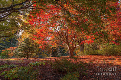 Photograph - Splendor Of Autumn At Biltmore by Dale Powell