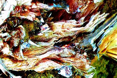 Photograph - Splintered Tree by Marianne Dow