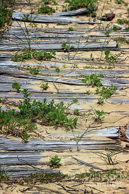 Photograph - Splinters In The Sand by Karen Adams