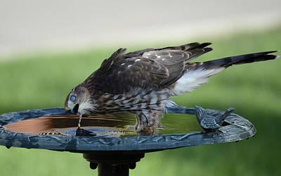 Photograph - Water And The Hawk by Rae Ann  M Garrett