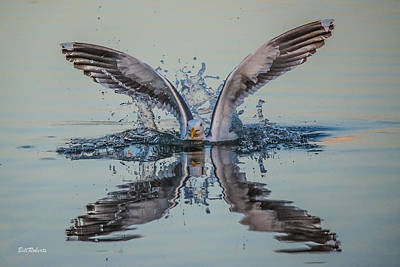 Gull Wall Art - Photograph - Splish-splash by Bill Roberts