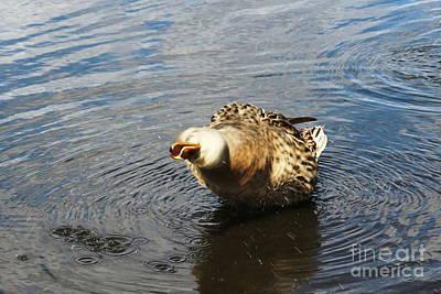 Owls - Splish Splash by Maria Pogoda