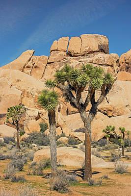 Photograph - Split Rock And Joshua Trees by Loree Johnson