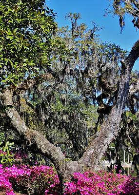 Photograph - Split Tree Beauty by Cynthia Guinn