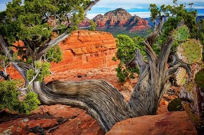 Photograph - Split View, Capital Butte, Sedona, Arizona by Flying Z Photography by Zayne Diamond