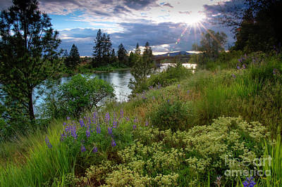 Photograph - Spokane River Spring by Idaho Scenic Images Linda Lantzy