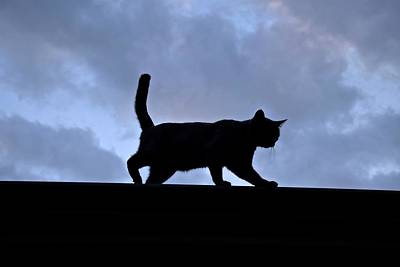 Photograph - Cat Walk by Jenny Regan