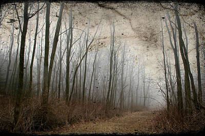 Photograph - Spooky Forest Path by Kathy Stanczak