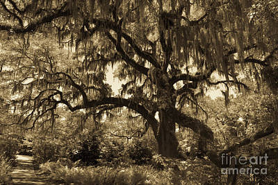 Photograph - Spooky Halloween Tree In Sepia by Dale Powell