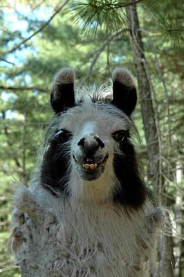 Llama Photograph - Spooky Llama by LeeAnn McLaneGoetz McLaneGoetzStudioLLCcom