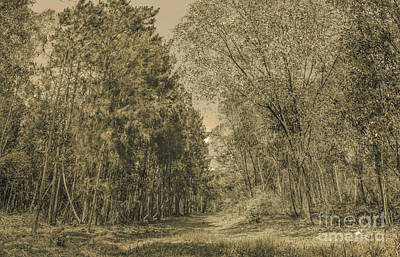Autumn Landscape Photograph - Spooky Old Woods by Jorgo Photography - Wall Art Gallery