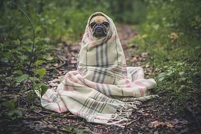 Photograph - Spooky Pug by Fine Art Photography