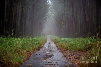 Photograph - Spooky Trail 2 by Daniel Knighton