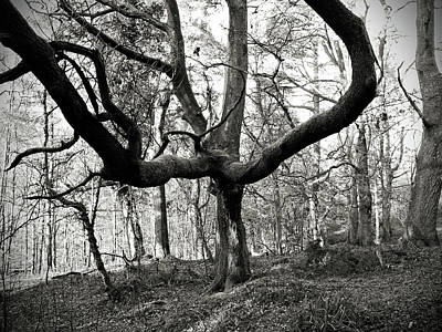 Photograph - Spooky Tree At Drum Manor Forest Park by Colin Clarke