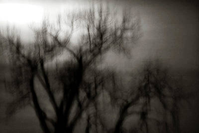 Spooky Tree Bw Art Print by Marilyn Hunt