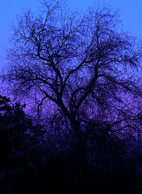 Photograph - Spooky Tree by Paul Marto