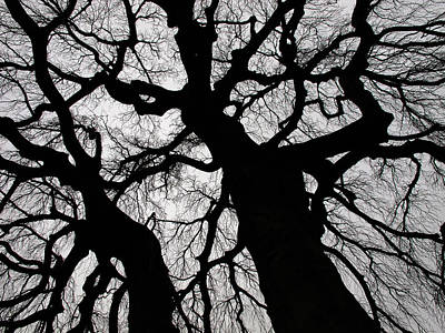 Photograph - Spooky Trees - 365-230 by Inge Riis McDonald