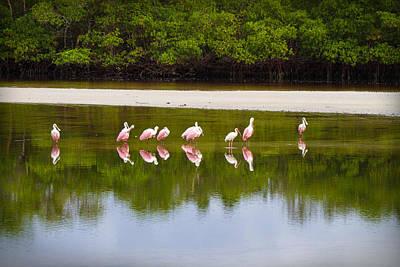 Ibis Photograph - Spoon Bill Landscape By Darrell Hutto by J Darrell Hutto
