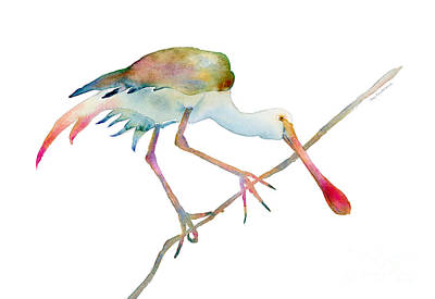 Animals Paintings - Spoonbill  by Amy Kirkpatrick