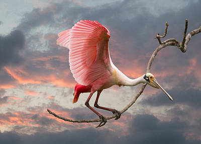 Spoonbill Digital Art - Spoonbill Fantasy #1 by Linda Murdock