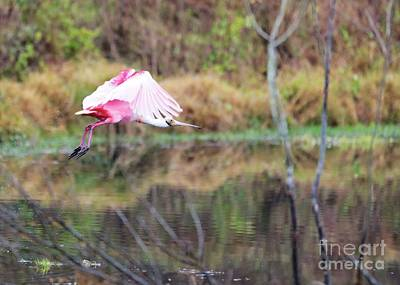 Photograph - Spoonbill Over The Pond by Carol Groenen