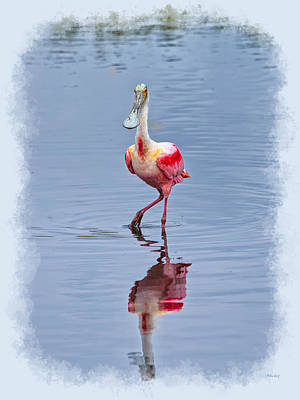 Clouds Photograph - Spoonbill Portrait Exhibit 2 by John M Bailey