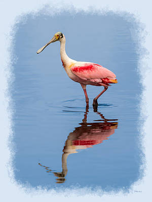 Photograph - Spoonbill Portrait Exhibit 3 by John M Bailey