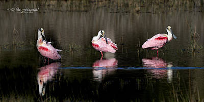Photograph - Spoonie Trio by Mike Fitzgerald