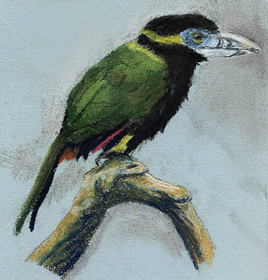 Spot-billed Toucanet Art Print by Nelson Caramico