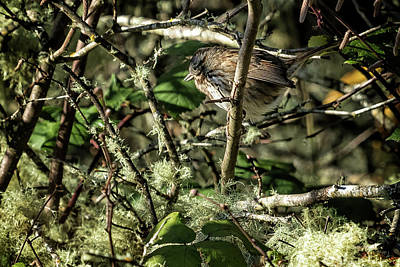Photograph - Spot The Sparrow by Belinda Greb