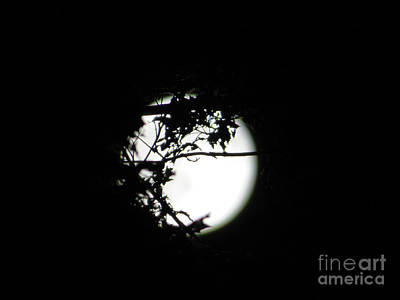 Photograph - Spotlight Moon by Leara Nicole Morris-Clark