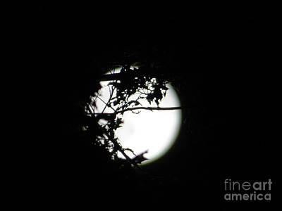Photograph - Spotlight Moon by Leara Nicole Morris-Clark