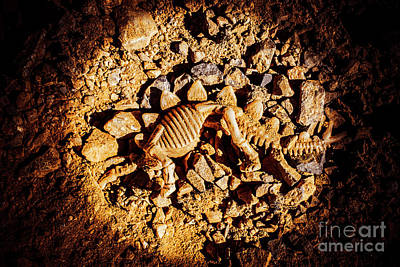 Bone Wall Art - Photograph - Spotlight On A Extinct Stegosaurus by Jorgo Photography - Wall Art Gallery