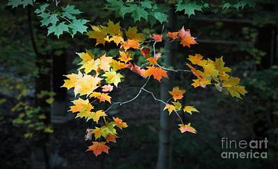 Photograph - Spotlight On Fall by Marcia Breznay
