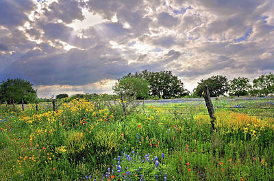 Photograph - Spotlight On Spring by Lynn Bauer