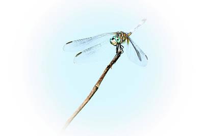 Photograph - Spotlight On The Cute Dragonfly by Debra Martz