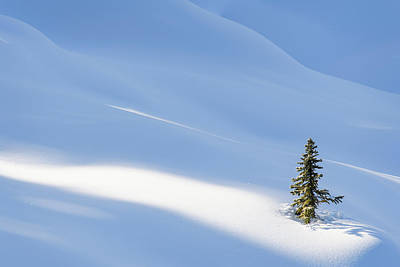 Photograph - Spotlight On Young Spruce by Michael Blanchette