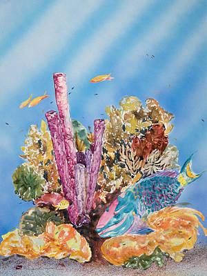 Sealife Art Painting - Spotlight Parrotfish by Tanya L Haynes - Printscapes